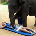 Секс-массаж слоном